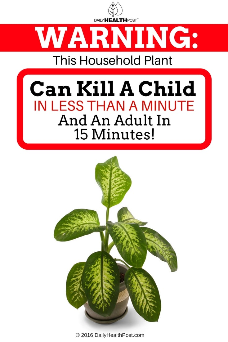 warning-this-household-plant-can-kill-a-child