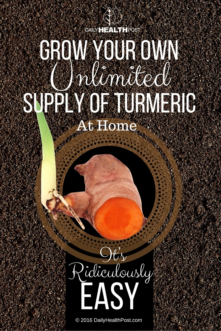 grow-unlimited-turmeric
