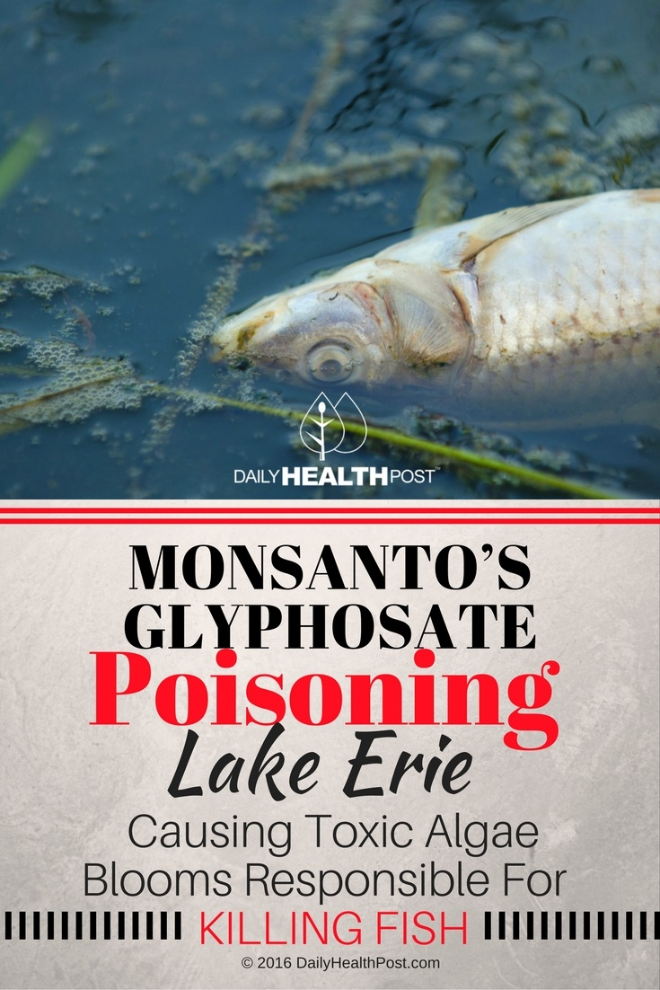 mosanto-poisoning-lake