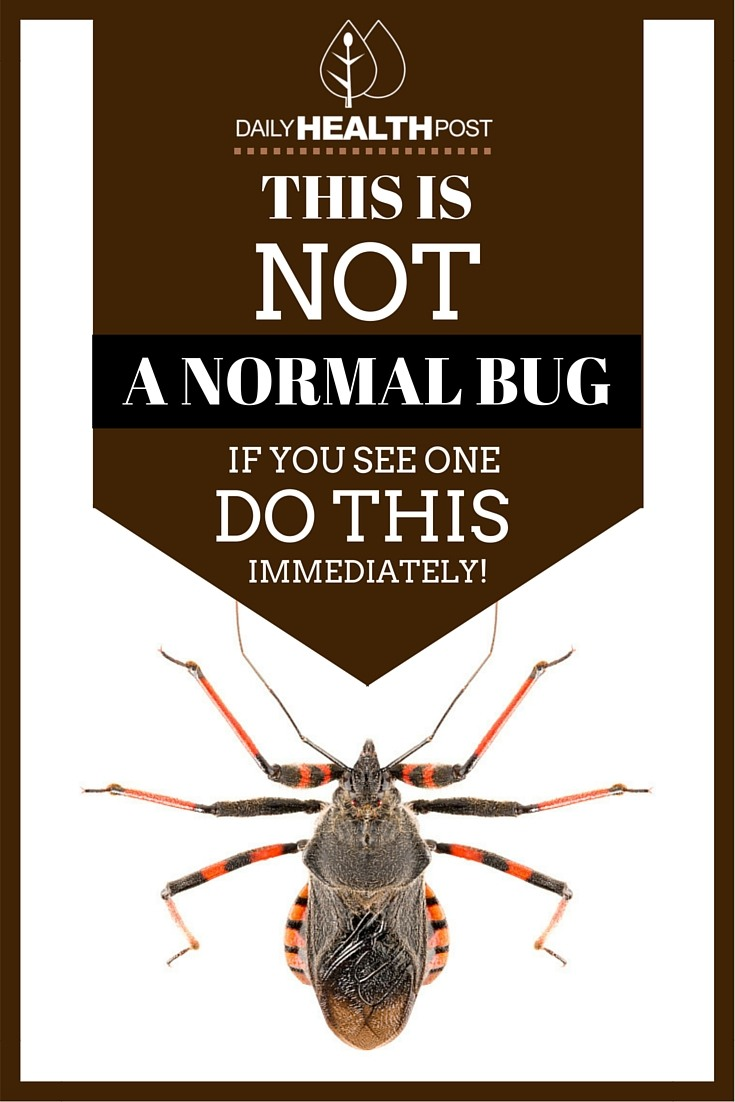 not-normal-bug