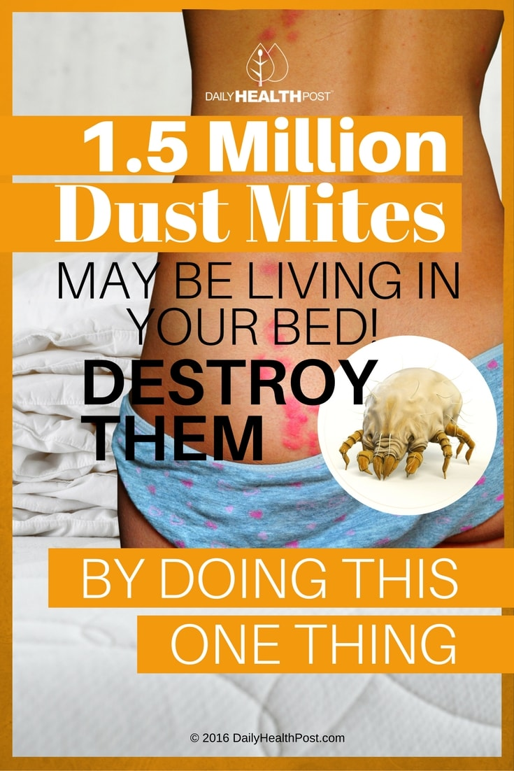 1 5 Million Dust Mites May Be Living In Your Bed Destroy