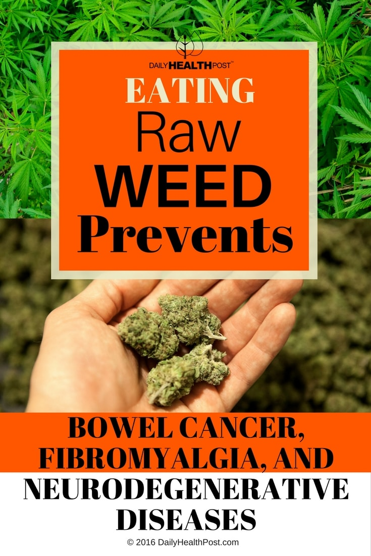 eating-raw-weed-prevents-bowel-cancer-fibromyalgia