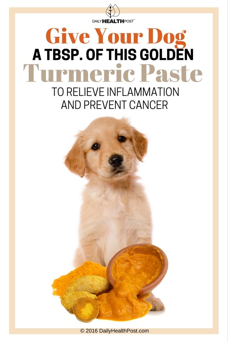 give-your-dog-a-tbsp-of-this-golden-turmeric-paste
