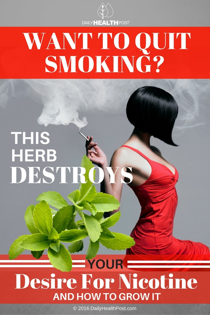 want-to-quit-smoking-this-herb-destroys-your-desire-for-nicotine
