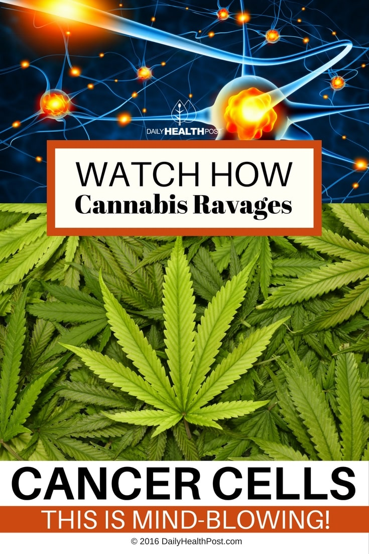 watch-how-cannabis-ravages-cancer-cells-this-is-mind-blowing