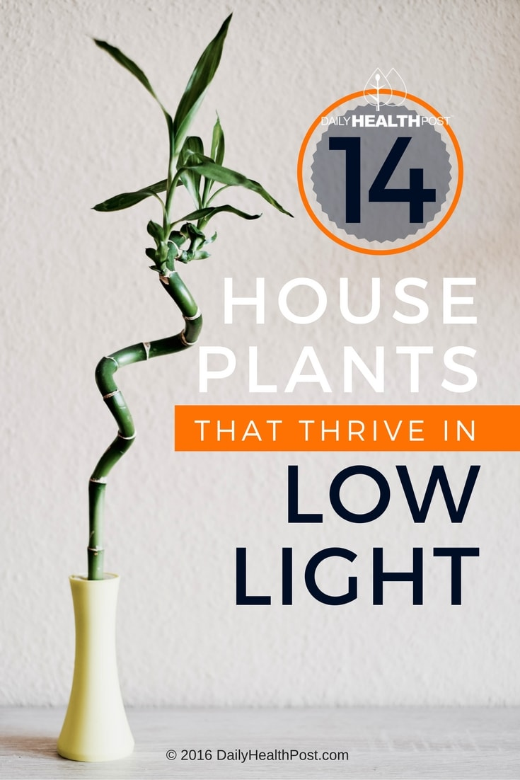 14-houseplants-that-thrive-in-low-light