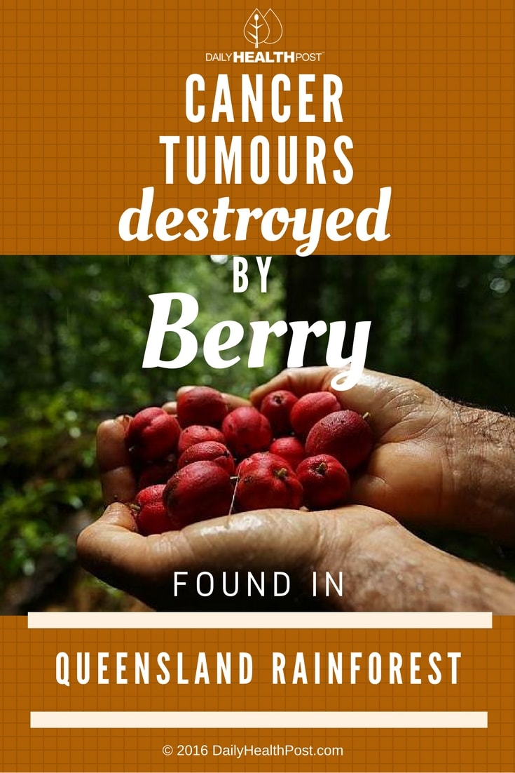 cancer-tumours-destroyed-by-berry-found-in-queensland-rainforest
