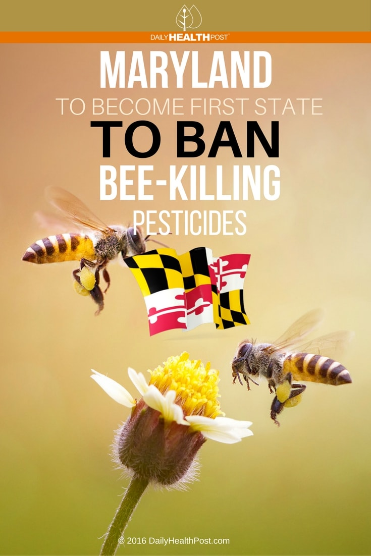maryland-to-become-first-state-to-ban-bee-killing-pesticides