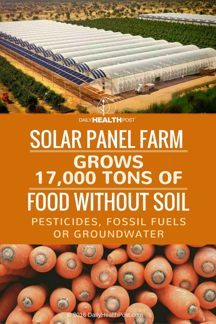 solar-panel-farm-grows-17000-tons-of-food-without-soil-pesticides-fossil-fuels