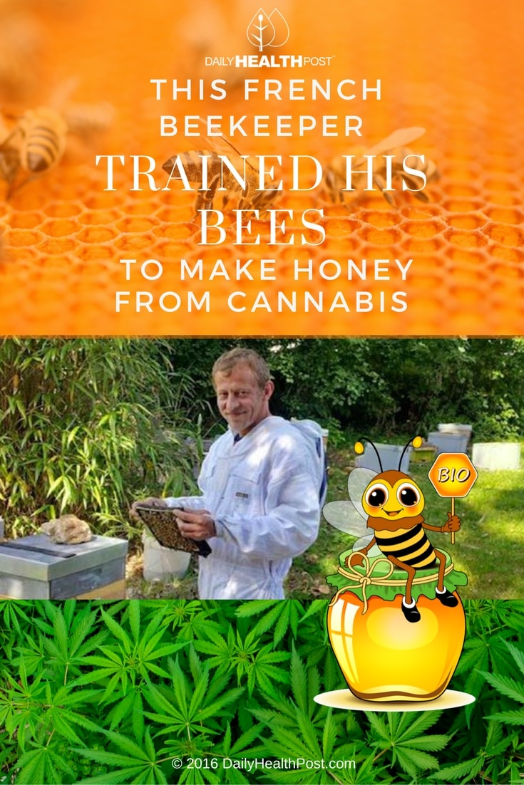 this-french-beekeeper-trained-his-bees-to-make-honey-from-cannabis