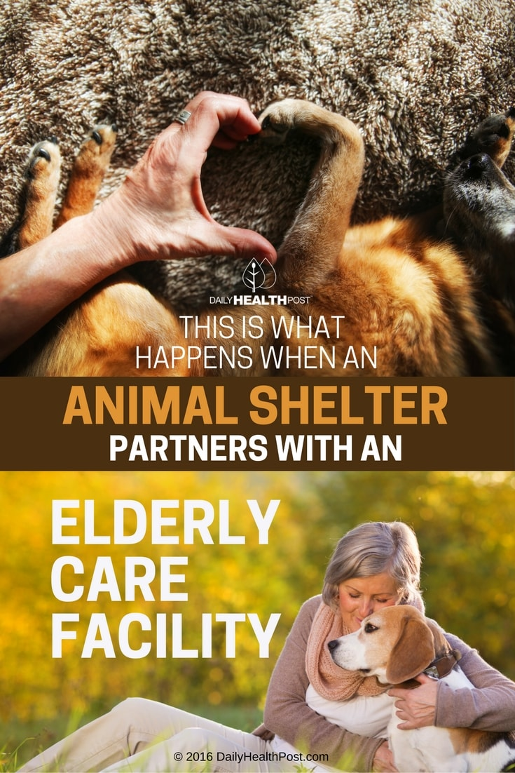 this-is-what-happens-when-an-animal-shelter-partners-with-an-elderly-care-facility