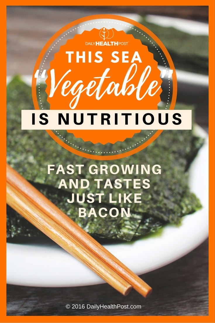 this-sea-vegetable-is-nutritious-fast-growing-and-tastes-just-like-bacon