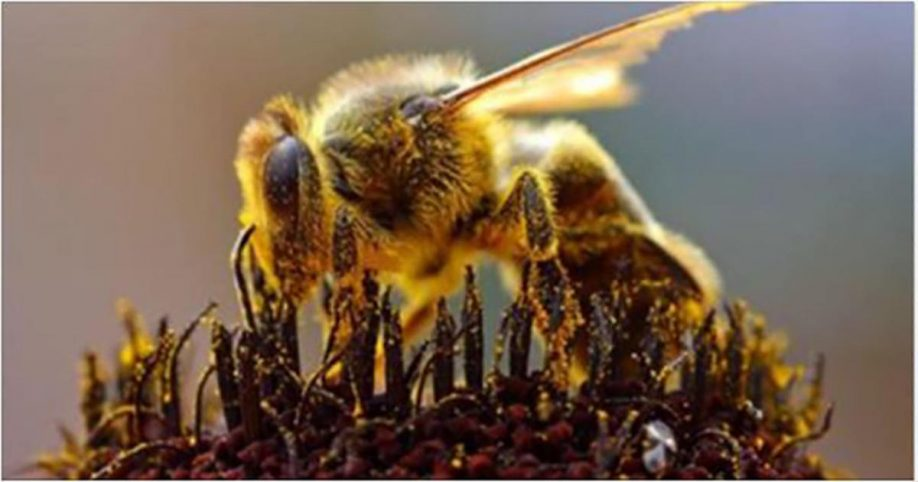 bee killing pesticides