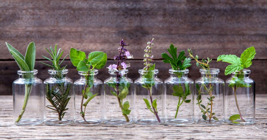 growing herbs indoors  varieties to grow in water all year long, Natural flower