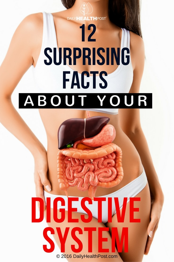 12 Digestive System Facts You Didnt Know Daily Health Post