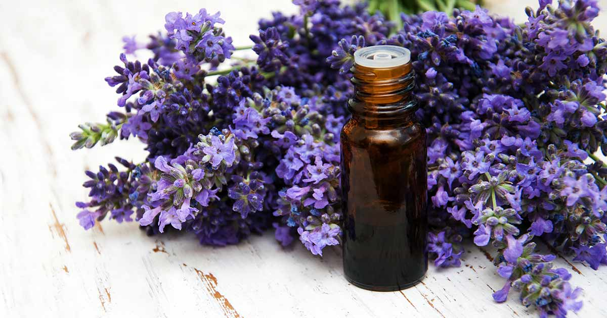 Essential Oil: Lavender Oil Offer Surprising Health Benefits