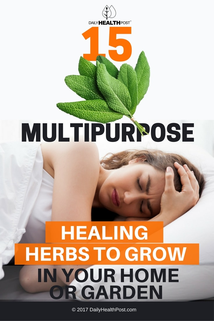 15 multipurpose healing herbs to grow in your home or garden. Black Bedroom Furniture Sets. Home Design Ideas