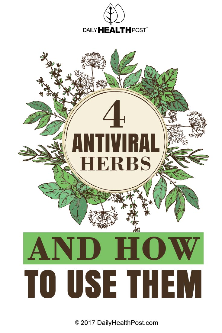 4 Antiviral Herbs And How To Use Them - Www imagez co