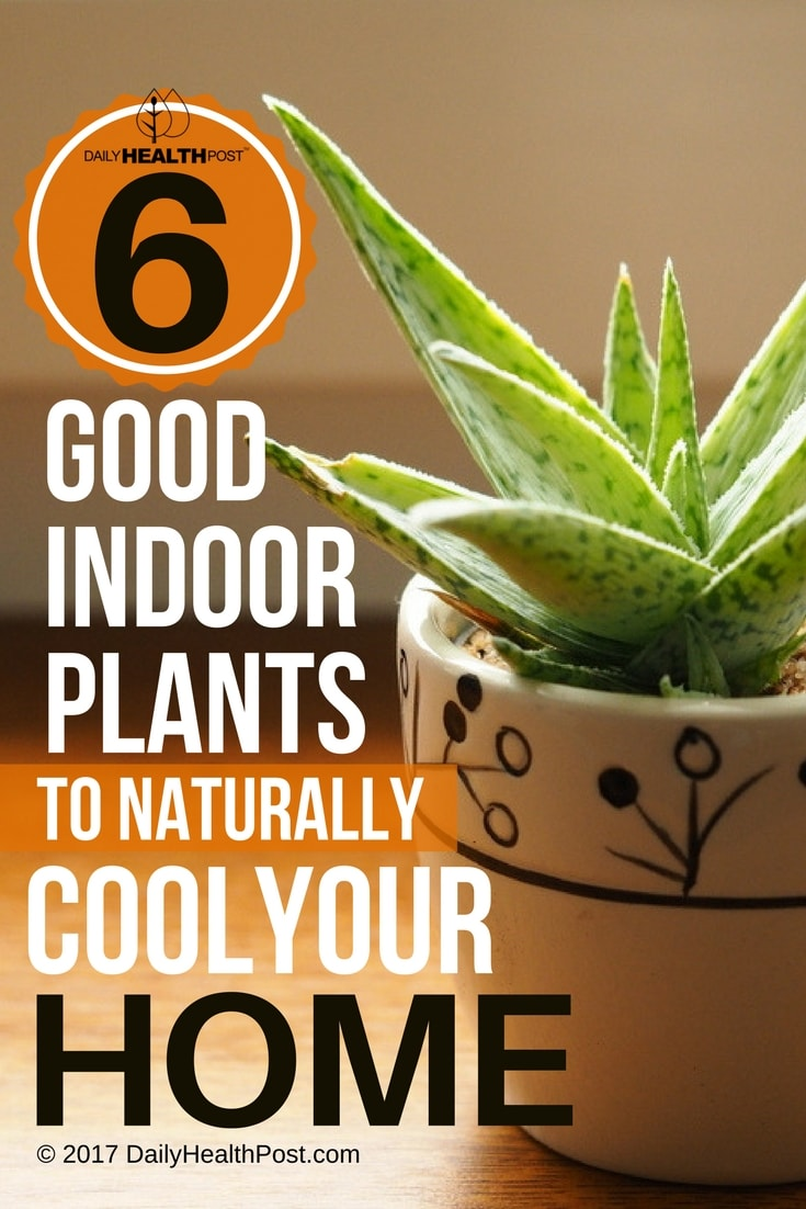 6 good indoor plants that will help keep your house for Good plants to have indoors