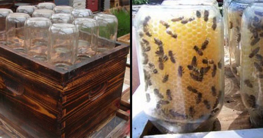 This DIY Honey Bee Hive Saves The Bees And Provides Fresh