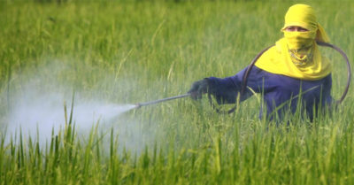 DDT Insecticide