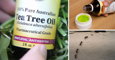 how to use tea tree oil