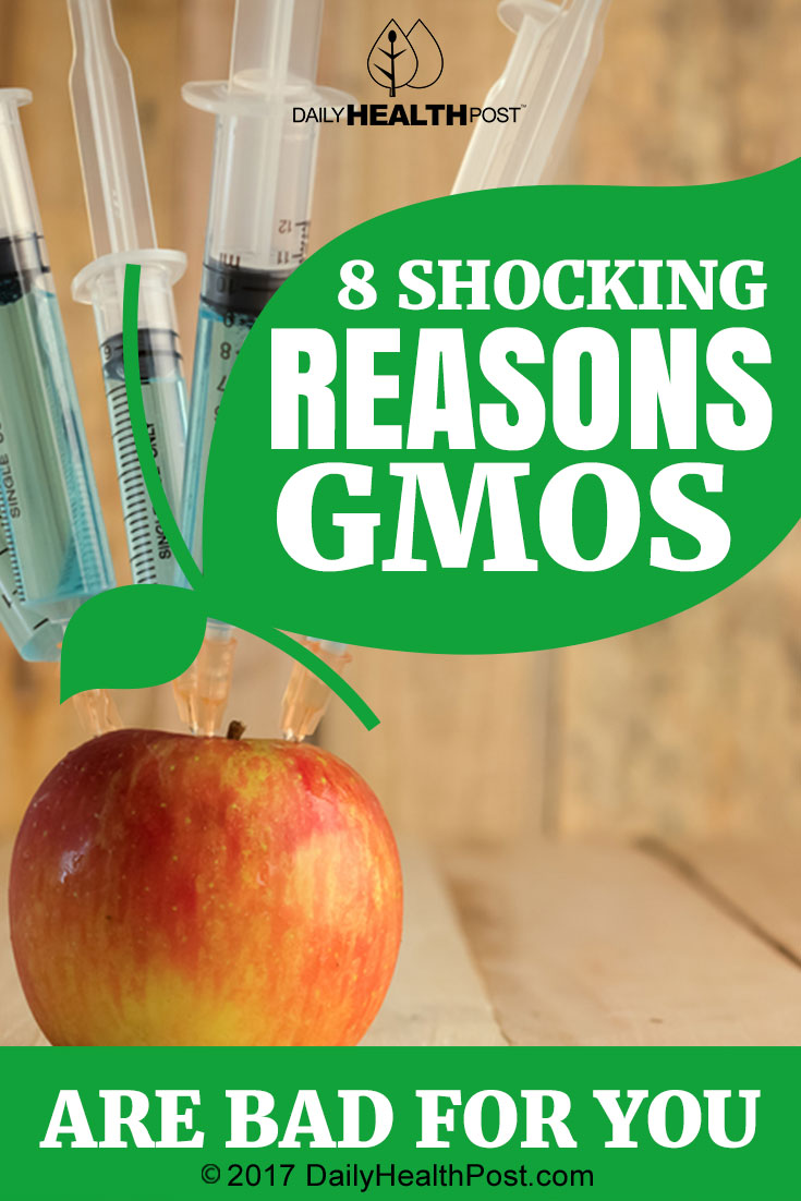 """genetically modified organisms not that bad Genetically modified foods have seeped into the daily diet in the united states  (ge) plants,""""6 or, more broadly, """"genetically modified organisms ."""