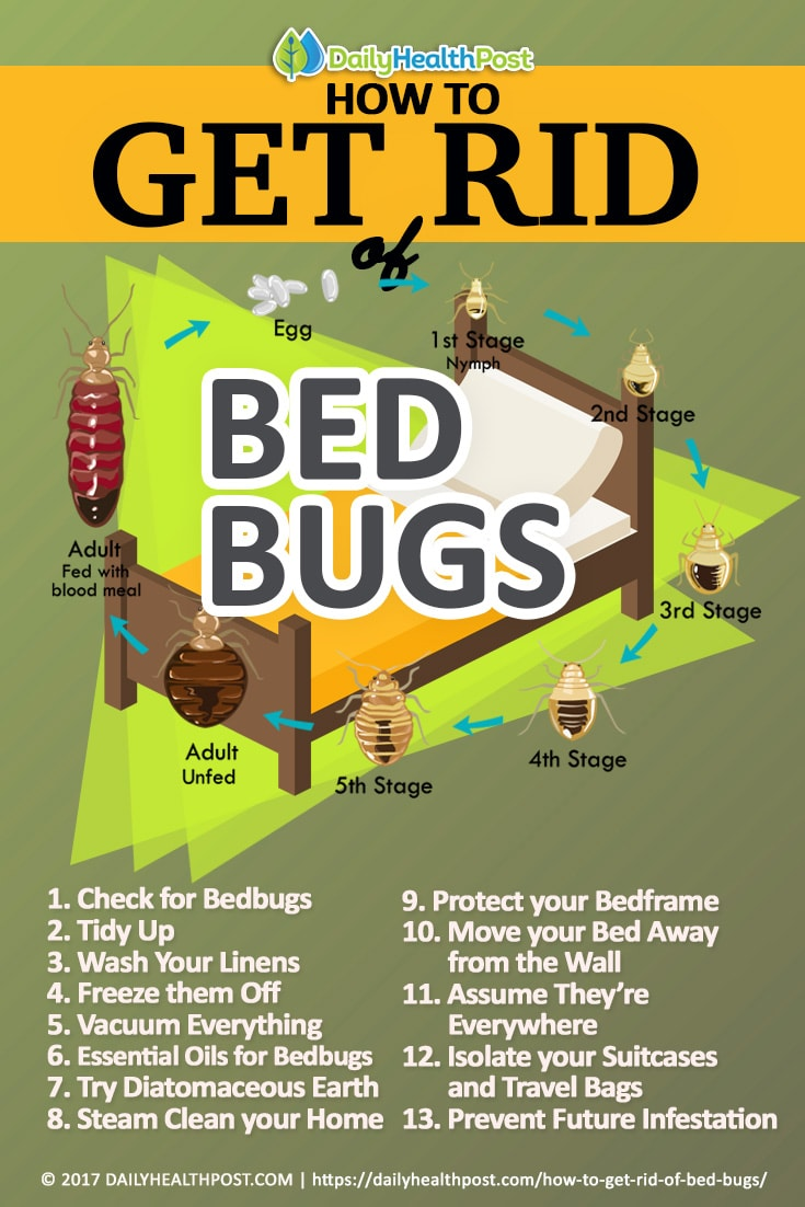 to bug watch natural for home bugs bed of rid remedies how get extermination