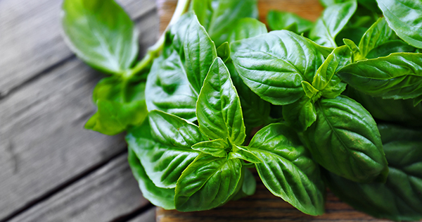 how to grow herbs all year long