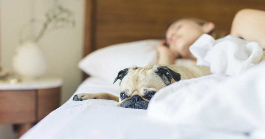 women sleep better dogs